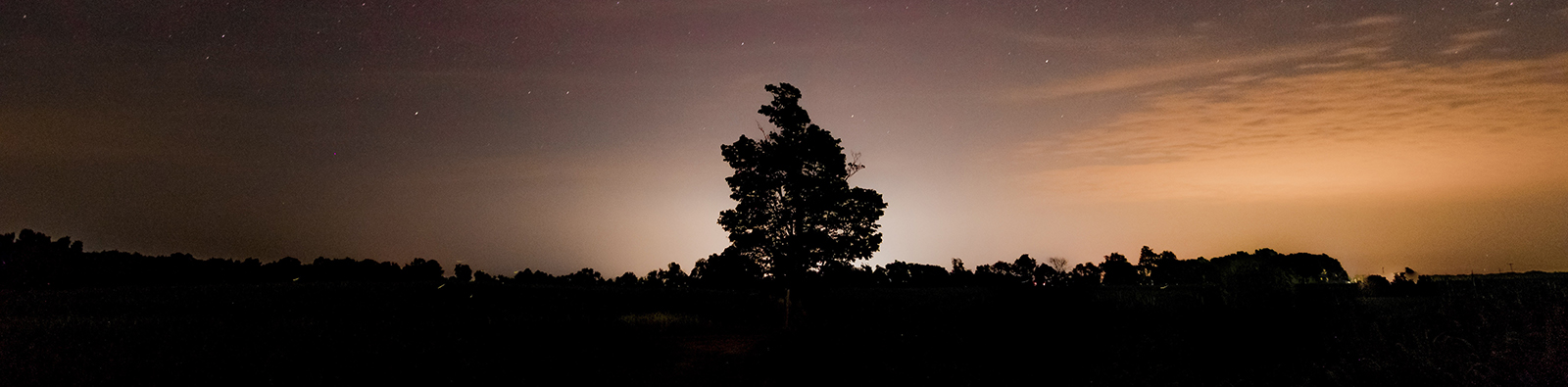 The silhouette of a tree at dusk