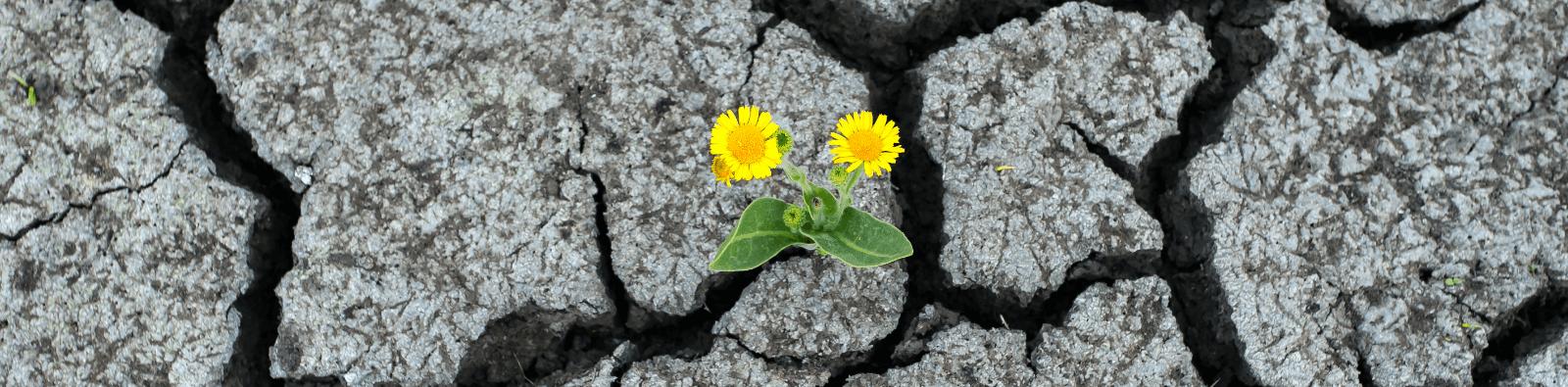 flower-growing-in-rocks